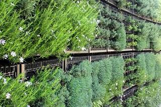 Edible Garden Herb Wall